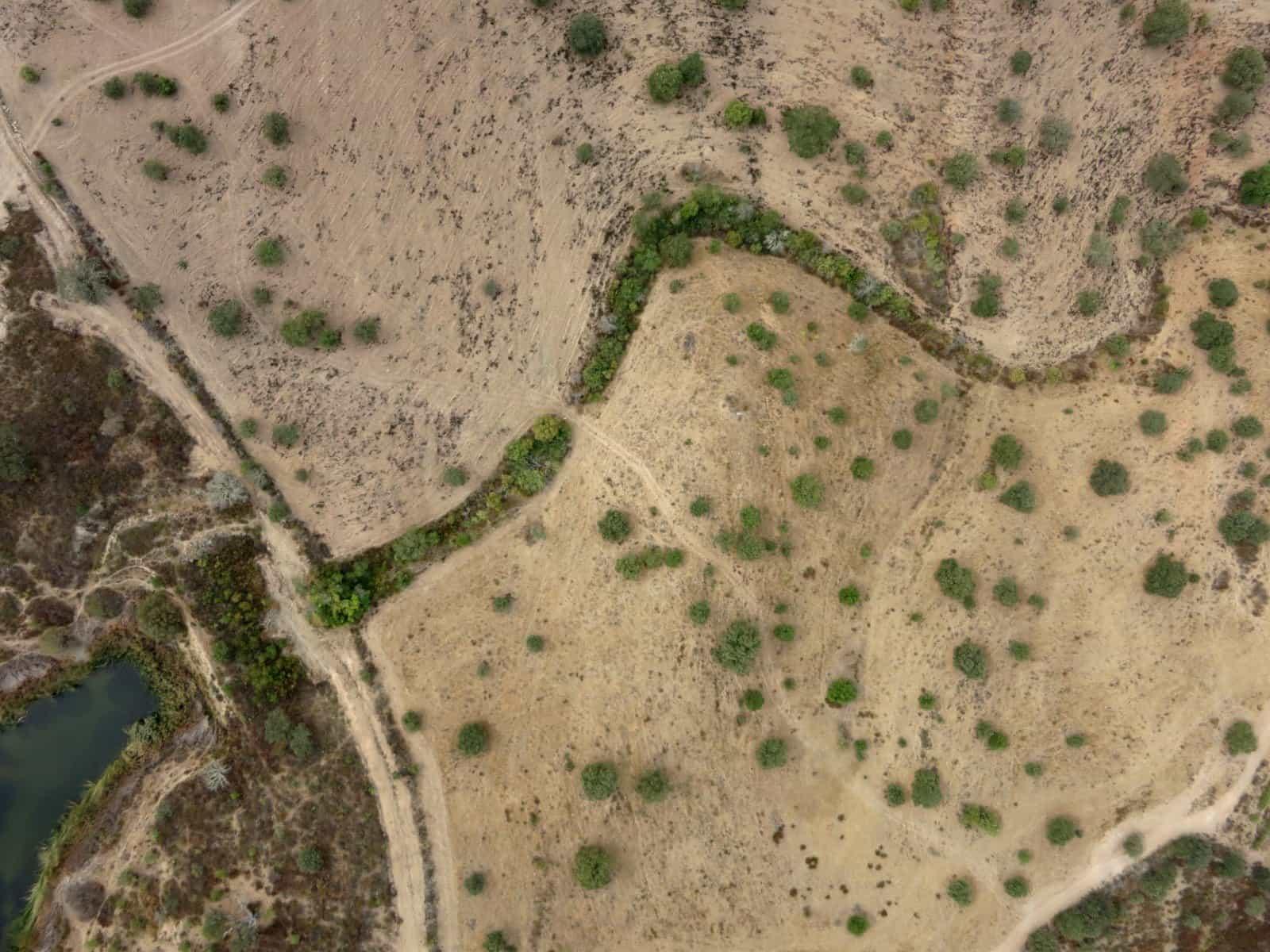 Vegetação ao longo de linha de água