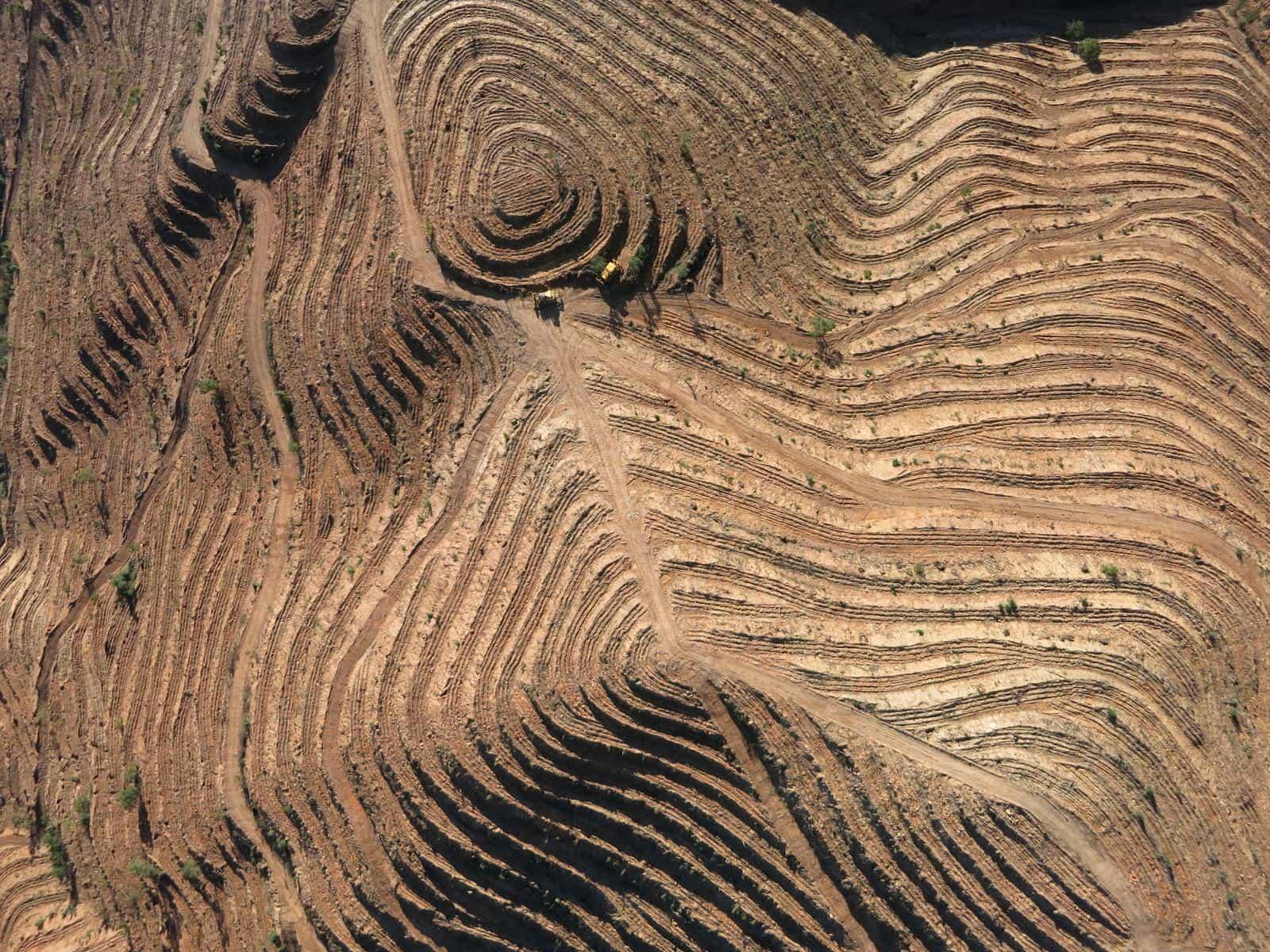 Pormenor de plantação florestal em patamares