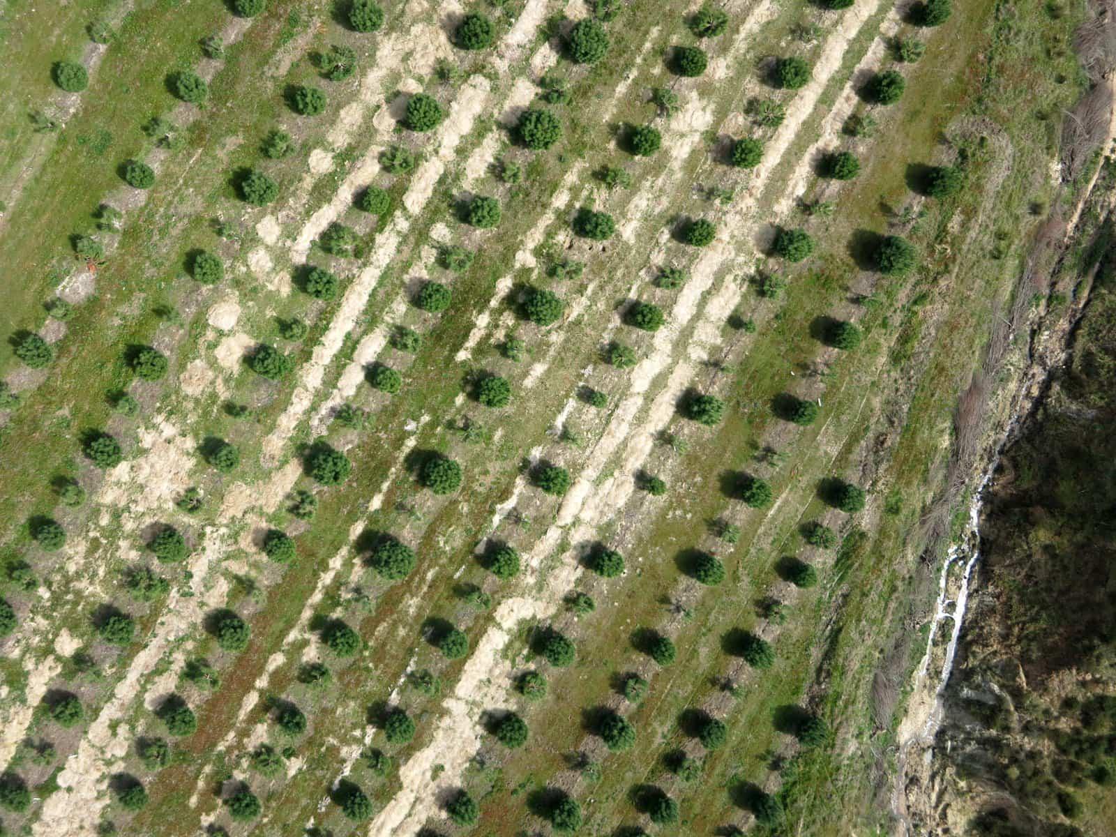 Apoio à plantação via drone