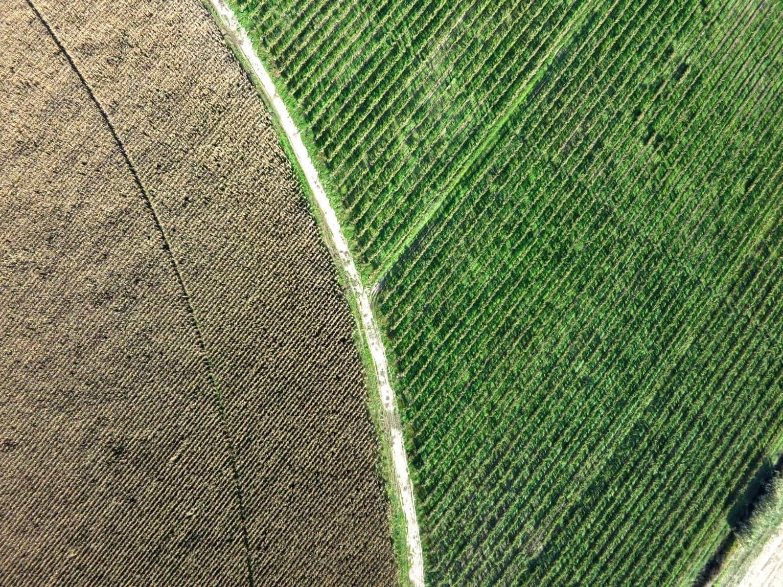 Pivot de milho e vinha