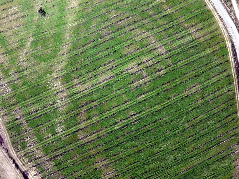 Linhas de plantação em olival biológico via drone