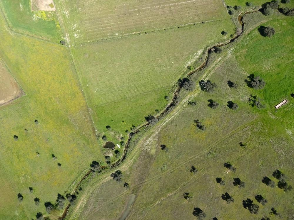 Linha de água em sistema agroflorestal